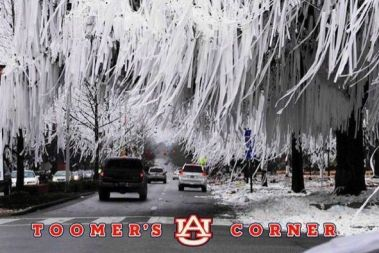 Toomer-Corner-Trees-Poisoned-Toilet-Paper